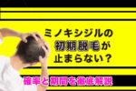 【画像】ミノキシジルの初期脱毛が止まらない?確率と期間を徹底解説