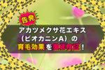 【告発】アカツメクサ花エキス(ビオカニンA)の育毛効果を徹底検証!
